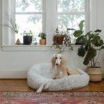 CBD bei Hunde mit Angst
